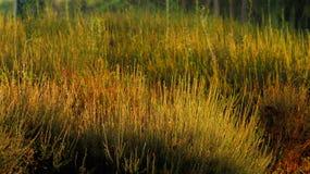 Пожелтетая зеленая трава Стоковое Изображение RF