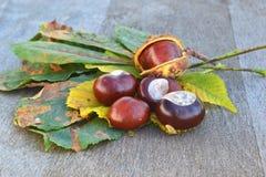 Пожелтетые кленовые листы и каштаны Стоковое фото RF
