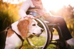 Пожилая женщина в кресло-коляске с собакой в природе осени Стоковая Фотография RF