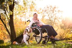 Пожилая женщина в кресло-коляске с собакой в природе осени Стоковые Фотографии RF