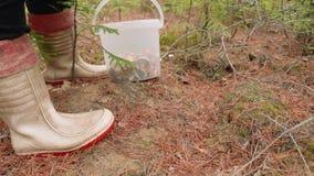 Пожилая женщина собирает грибы в лесе в осени и положила их в ведро сток-видео