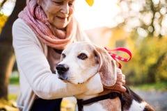 Пожилая женщина с собакой в природе осени Стоковое Изображение