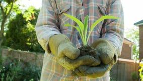 Пожилой садовник держа молодой всход в его руках сток-видео