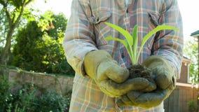 Пожилой садовник держа молодой всход в его руках видеоматериал