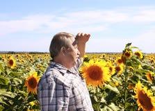 Пожилые хуторянин и солнцецветы стоковая фотография