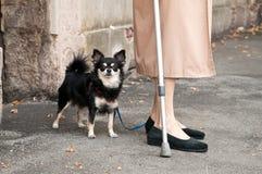 Пожилая женщина с собакой Стоковые Фотографии RF