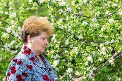Пожилой сад женщины весной Стоковые Фото