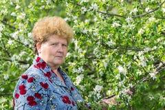 Пожилой сад женщины весной Стоковые Фотографии RF