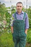 Пожилой садовник и цветя яблони стоковые изображения rf