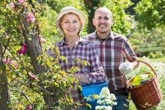 Пожилой смеясь над садовничать приниманнсяый за парами Стоковая Фотография
