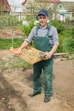 Пожилой человек засаживая картошки в его саде Стоковое Фото