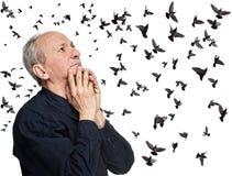 Пожилой человек смотря вверх на летящих птицах стоковое изображение