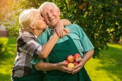 Пожилые пары с яблоками Стоковое Фото