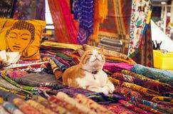 Позабавленный кот Стоковое Изображение