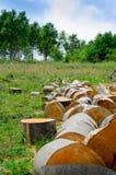 Позаботьтесь о деревья и лес Стоковые Изображения