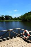 Позволенный заплыв в лете стоковое фото