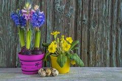 Поздравительная открытка пасхи или весны с яичком цветков и триперсток весны Стоковое Фото