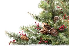 Поздравительная открытка рождества с ветвями ели и Стоковая Фотография