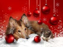 Поздравительная открытка рождества с любимчиками Стоковая Фотография