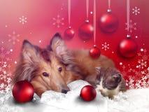 Поздравительная открытка рождества с любимчиками Стоковые Изображения