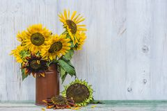 Поздравительная открытка с яркими солнцецветами Стоковое фото RF
