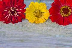 Поздравительная открытка с яркими цветками Стоковое Фото