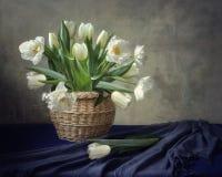 Поздравления чешут с тюльпанами wite Стоковое фото RF