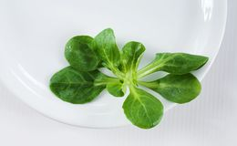 позеленейте белизну Стоковые Фото