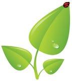 позеленейте завод ladybug Стоковые Изображения RF