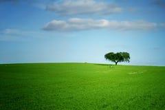 позеленейте ландшафт Стоковая Фотография RF
