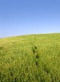 позеленейте ландшафт Стоковые Фото