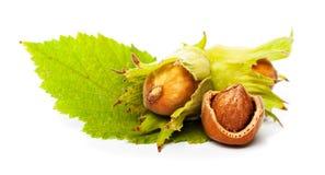 позеленейте листья фундука стоковые фотографии rf