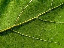 позеленейте листья Стоковые Изображения RF