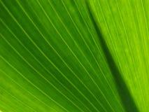 позеленейте листья Стоковые Изображения