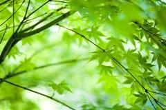позеленейте листья Стоковое Изображение