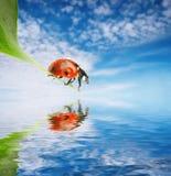позеленейте листья ladybug Стоковое Изображение RF