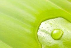 позеленейте поверхностную вода листьев Стоковая Фотография RF