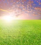 Позеленейте поле стоковые фотографии rf