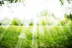 Позеленейте предпосылку ландшафта с солнечностью и Boke Стоковая Фотография