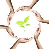 позеленейте руки над белизной окруженной заводом стоковые изображения rf