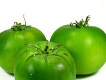 позеленейте томаты Стоковые Фото