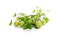 позеленейте груши Стоковые Фото