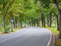 Позеленейте деревья в парке Стоковое Изображение RF