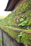 Позеленейте на стене Стоковые Изображения RF