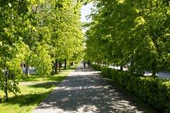 Позеленейте переулок Стоковое Фото