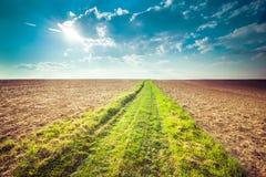 позеленейте путь Стоковые Изображения
