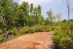 позеленейте сочную тропу парка Стоковые Изображения RF