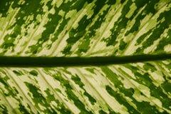позеленейте текстуру листьев Стоковые Фото