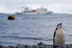 позиция пингвина Стоковая Фотография