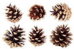 Позолоченный конус сосны - украшение рождества Стоковые Изображения
